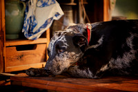 """waiting for breakfast"", ""fine art photography"", ""limited edition giclée  print"", breakfast, ""chuck wagon"", dog"
