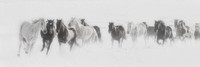"Horses, Wyoming, cowboys, cowgirls, ""fine art photography"", snow, snowbound, ""western photography"", white., winter, ""winters chill"""