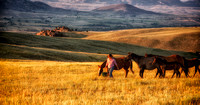 "Wyoming, horses, ""western art"", mountains, ""fine art photography"", sunset, ""western photography"", mares, foals, suppertime"