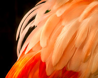 """flamingo feathers"", birds, feathers, ""fine art photography"", flamingo, ""limited edition giclée  print"", phoenicapteriformes, pink, water"