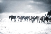 "Horses, Wyoming, ""between heaven and earth"", cowboys, cowgirls, ""fine art photography"", snow, ""western photography"", white, winter"