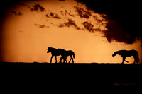 "equine, ""fine art photography"", horses, silhouette, ""snake silhouette"", sunset, western""western photography"", ""wild horses"", wyoming, ""mccullough peaks"""