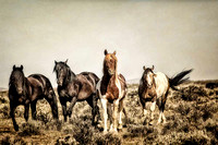 "Horses, Wyoming, cowboys, cowgirls, ""fine art photography"", ranching, ""western art"", ""western photography"", ""wild horses"", ""mccullough peaks"""