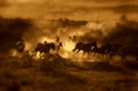 "Horses, ""New Mexico"", ""Santa Fe"", dust, ""fine art photography"", ""gold dust"", ""equine photography"""